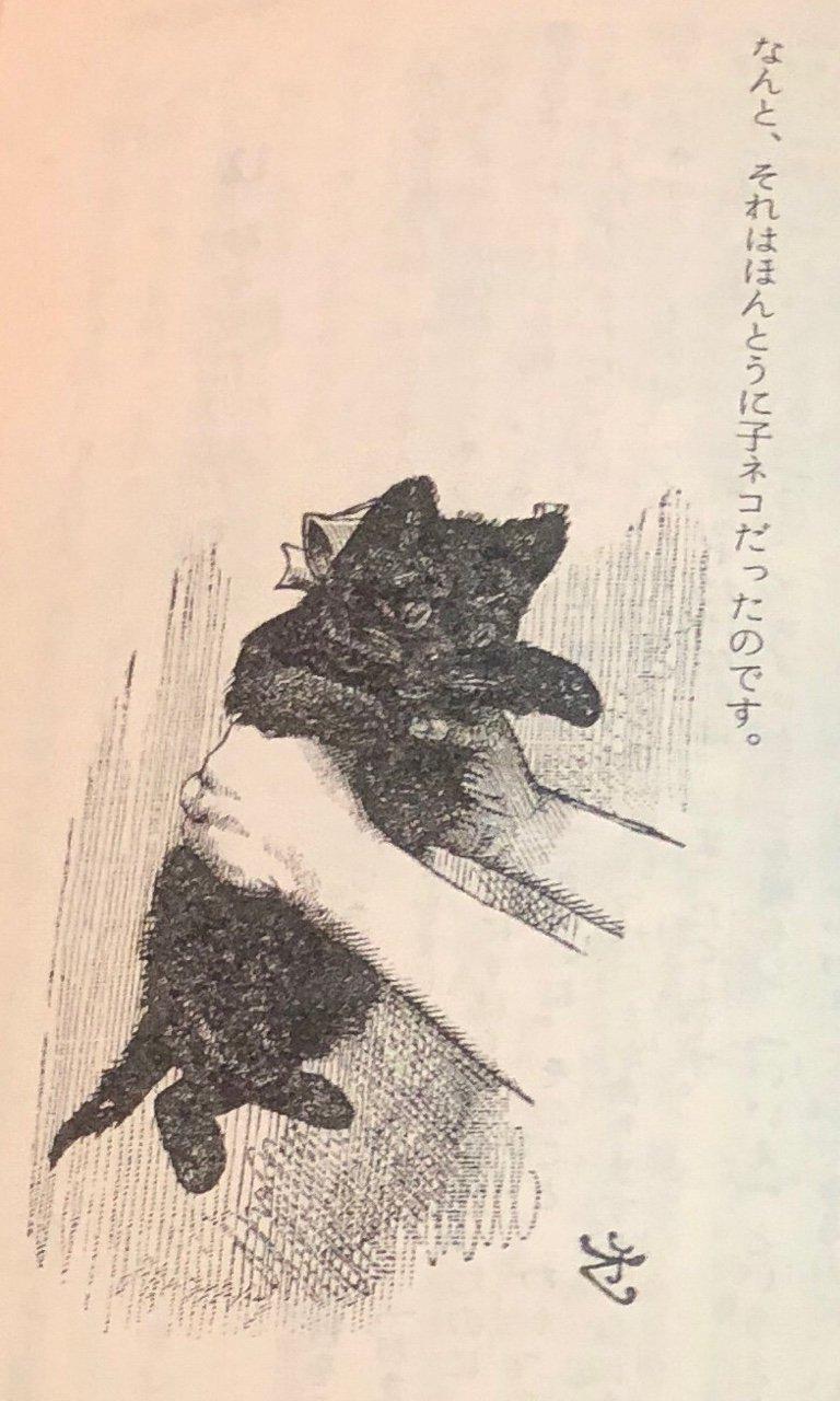 子ネコを揺さぶる。 https://t.co/dCvqPa0eS7