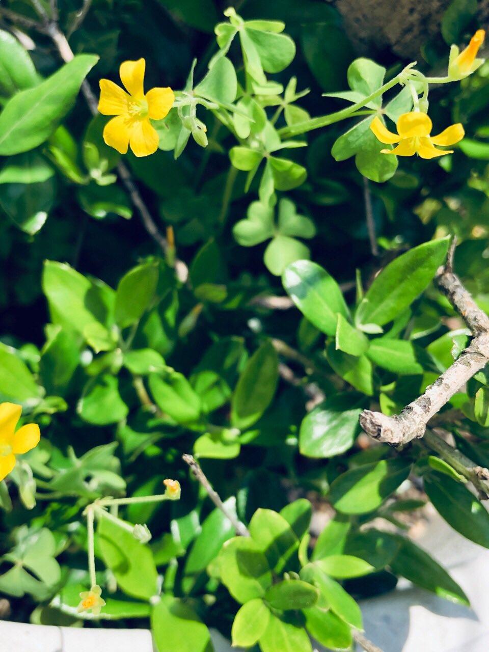虫に食われてボロボロになってたオリーブの木だけど、根元から新しい芽が出てきてた。以前はこの芽も虫に食われて無くなってしまったけど、今回は成長してくれるといいな。 https://t.co/cHKdcl2hrn