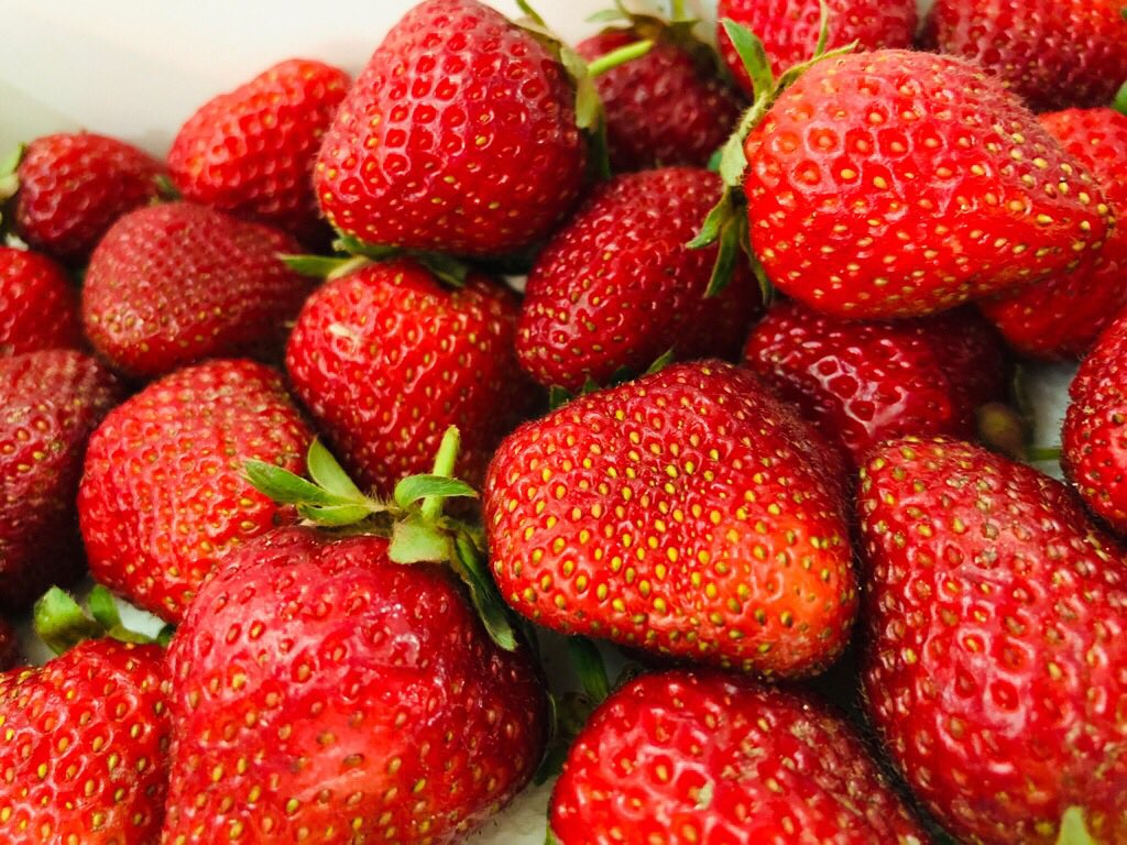 近所の畑で採れたイチゴをいただく(*゚▽゚*)🍓 https://t.co/60Y5EC1aKW