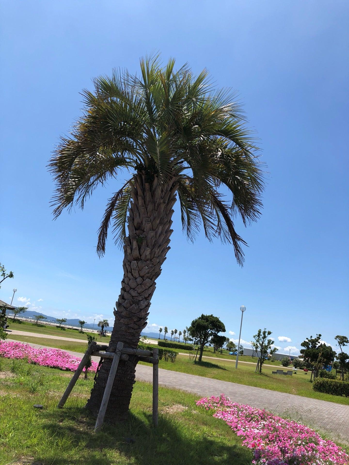 I'm at ラグーナビーチ(大塚海浜緑地) in 蒲郡市, 愛知県 https://t.co/lipvRZeX79 https://t.co/n0NA0LBh7y