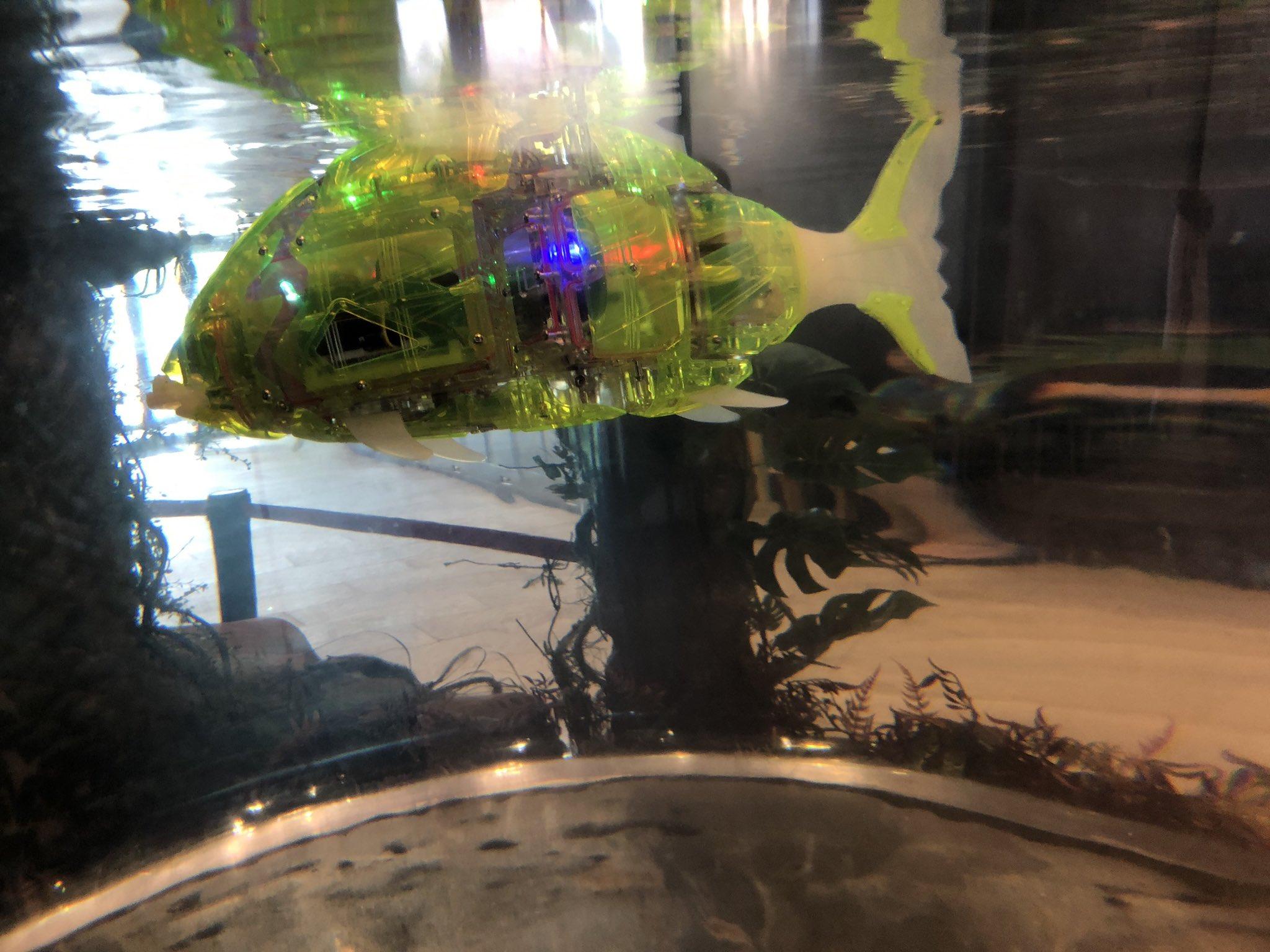 魚ロボット https://t.co/Up9iuosskK