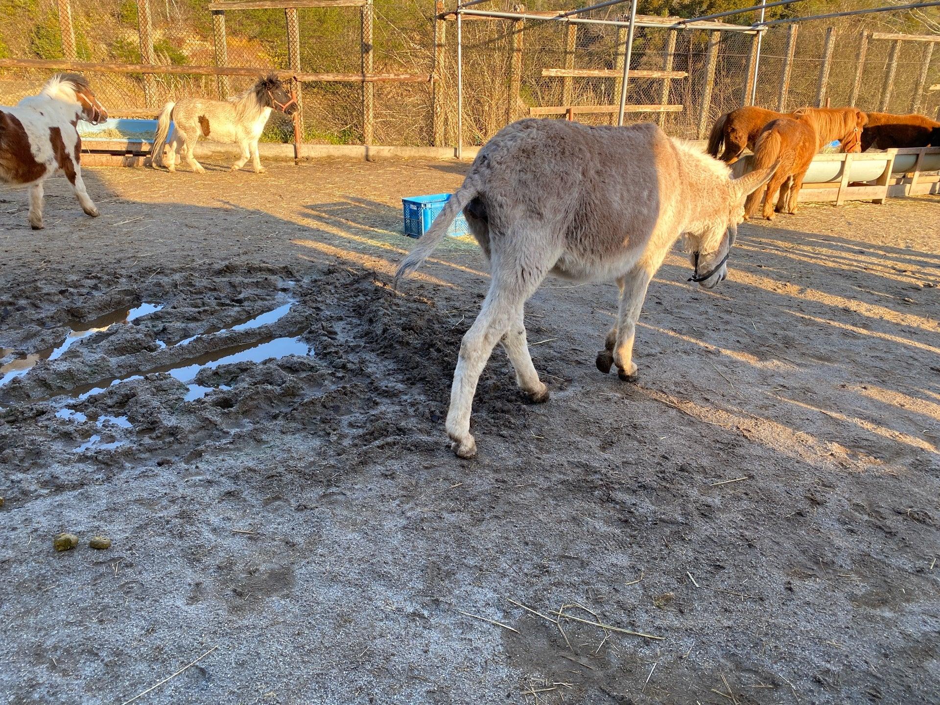 ロバさん、歩きウンコしてる。 (@ 小さなのんびり学習牧場 in 伊賀市, 三重県) https://t.co/2tl5OVktyp https://t.co/HfhR7hbx7U